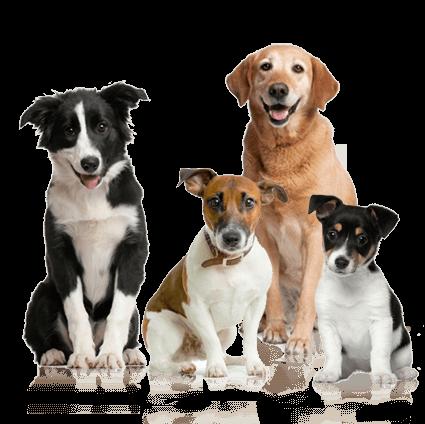 K9 Doodie Patrol dog_PNG195 Residential Services