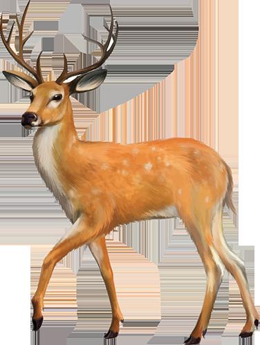 K9 Doodie Patrol deer-img Geese and Deer Waste Cleanup